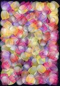 Crazy tulips — Stock Photo