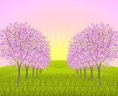 Apple blossom morning — Stock Photo