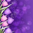 Stock Photo: Deep purple Tulip border