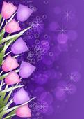 深い紫チューリップ境界線 — ストック写真
