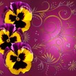 Stock Photo: Pansies on magentbackground with swirls
