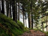 Trail in the mountain forest — Stockfoto