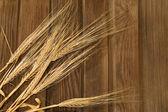 épis de blé — Photo