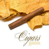 Cigar and leaf — Stock Photo