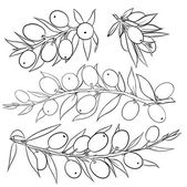 Olive branch — Stockvector