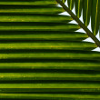 Coconut Leaf Background — Stock Photo