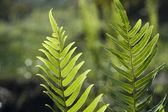 Leaf of a Fern — Stock Photo