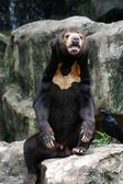 Black Bear in Zoo — Photo