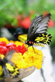 Butterfly with Flower — Stock Photo