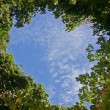 Heart-shaped Sky in a Tropical Forest — Zdjęcie stockowe