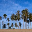 Stock Photo: Coconut Palms on the Beach