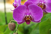 Purple Flowers Orchid — Stock Photo