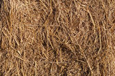 Wheat residues background — Stock Photo