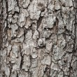 Tree bark texture — Stock Photo #9614244