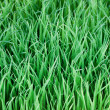 Young green paddy plant suitable background — Stock Photo #9771624