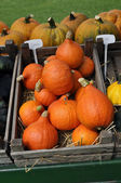 Orange Pumpkins — Stock fotografie