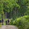 Mountainbikers in a forest — Stock Photo #9762846