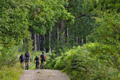Mountainbikers in a forest — Stock Photo