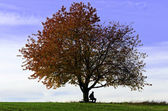 Sitting under the tree — Stock Photo