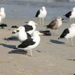 Seagulls — Stock Photo #8294207