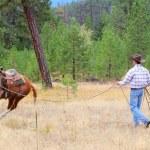 Horse trainer — Stock Photo #8296084