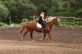 Passeios a cavalo — Foto Stock