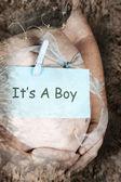 Embarazo — Foto de Stock