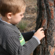 Boy chipping bark - Stock Photo