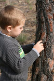 Boy chipping bark — Stock Photo