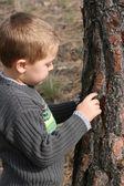Boy chipping bark — Stock Photo