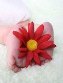 Baby feet — Stock Photo