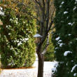 Snow tree - Stock Photo