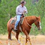 Horse trainer — Stock Photo