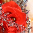 Red Rose Pearl — Stock Photo