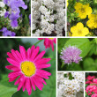 Combination flowers — Stock Photo