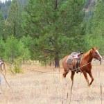 Horse trainer — Stock Photo #9328106