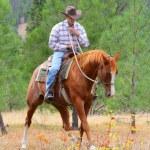 Horse trainer — Stock Photo #9354529