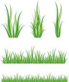 Ensemble d'herbe verte — Vecteur
