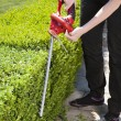Hedge trimmer — Stock Photo #9522596