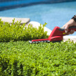 Hedge trimmer — Stock Photo