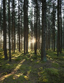 The forest in the morning — Stock Photo
