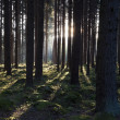 The primeval forest — Stock Photo #9928612