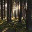 The primeval forest — Stock Photo #9931230
