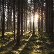 The primeval forest — Stock Photo #9931280