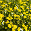 Many yellow flowers — Stock Photo