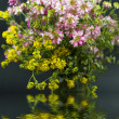 Bouquet of different wild flowers with reflection in the water on a dark ba — ストック写真