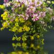 boeket van verschillende wilde bloemen met weerspiegeling in het water op een donkere ba — Stockfoto
