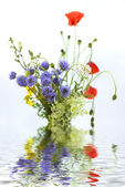 Bouquet of different wild flowers with reflection in the water on a white b — Stock Photo