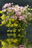 Bouquet of different wild flowers with reflection in the water on a dark ba — Stock Photo