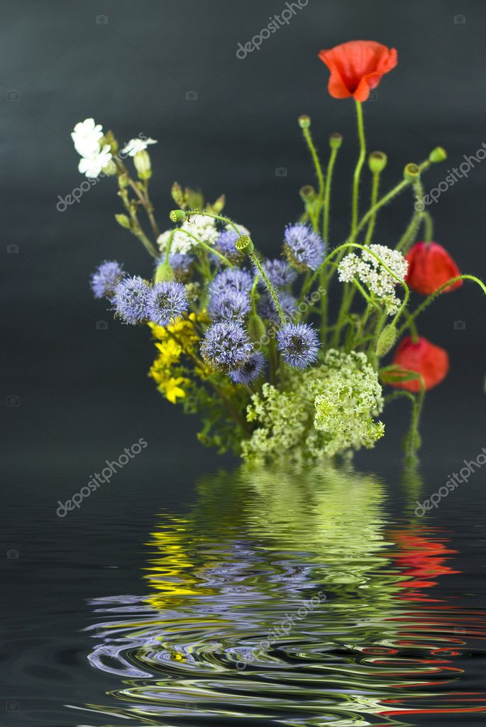 Bouquet of different wild flowers with reflection in the water on a dark background  Stock Photo #8415844